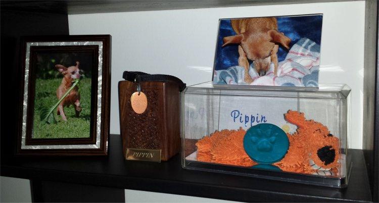 PIPPIN-HOME2.jpg (54126 bytes)