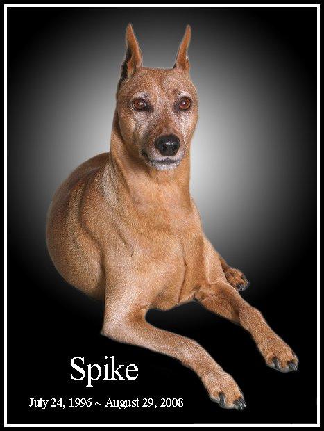 spike-11years.jpg (47783 bytes)